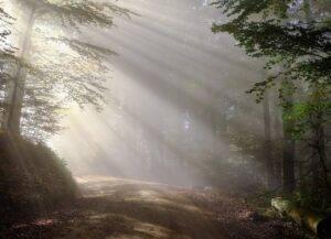 dirt road, sunbeams, forest