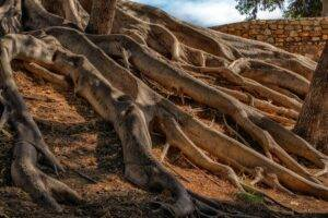 roots, tree, nature
