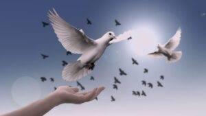 dove, hand, trust